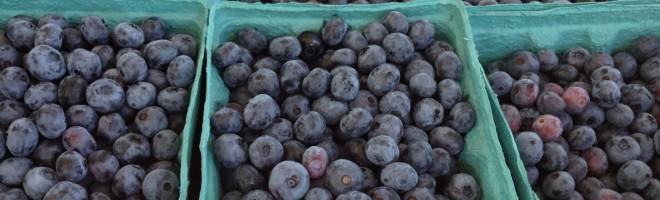 Great Places to Pick Your Own Blueberries Near New York City