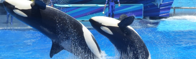Confessions of a SeaWorld Skeptic – Visiting SeaWorld in the Midst of the Blackfish Controversy