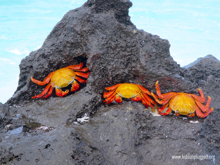 Colorful sea creatures delight photographers in the Galapagos Islands